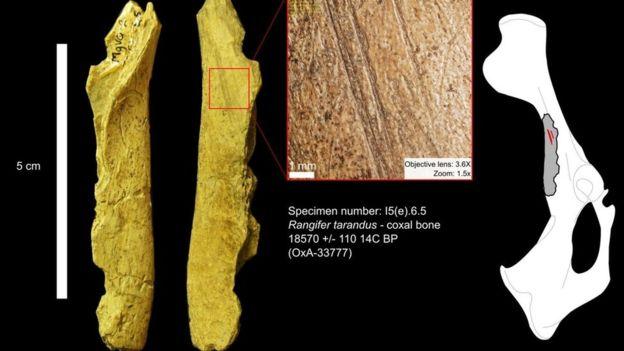 Restos animales fueron descubiertos en el sitio arqueológico de las cuevas Bluefish en el territorio del Yukón. LAURIANE BOURGEON/MUSEO CANADIENSE DE HISTORIA
