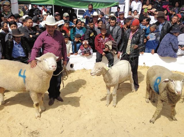 Productores exhiben sus ejemplares en la feria, esta semana, en Chiantla, Huehuetenango. (Foto Prensa Libre: Mike Castillo)