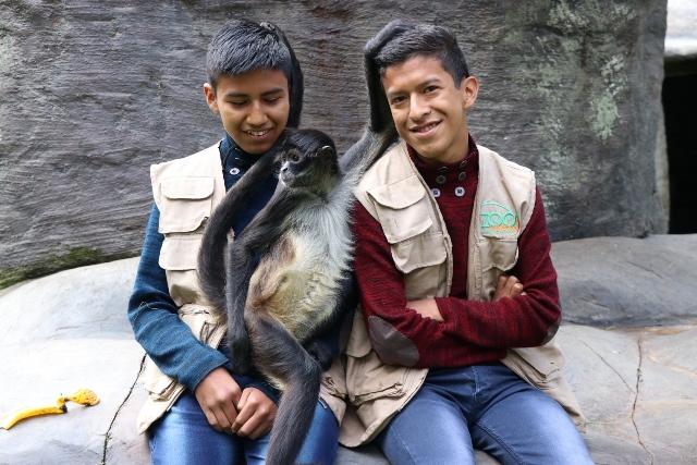 Los visitantes del Zoológico Minerva, en Quetzaltenango, pueden acariciar, darles de comer o abrazar a los monos araña. (Foto Prensa Libre: María José Longo)