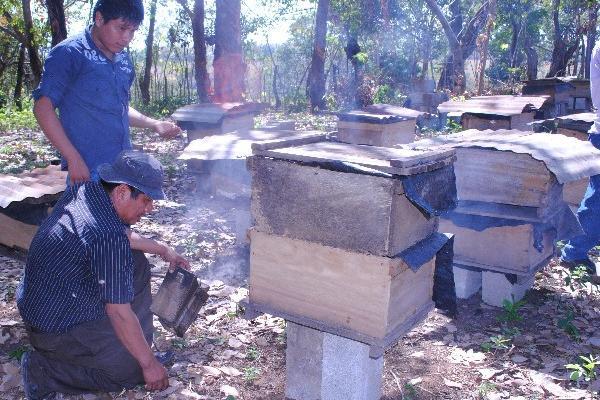 Afectados por la mortandad de abejas en el suroccidente del país piden apoyo al Gobierno.