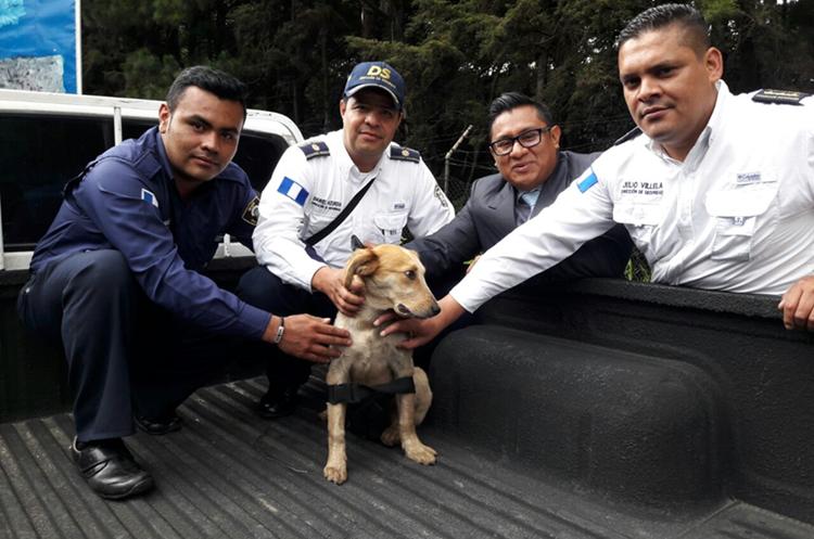 Agentes de la Policía Municipal hallaron a la perrita que fue maltratada por los vendedores. (Foto: Municipalidad de Mixco)