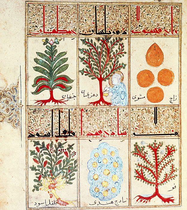 """Del """"Tratado sobre la triaca"""", un manuscrito árabe del siglo XIII, seis hierbas para hacer el remedio. En esa época, la medicina árabe era más avanzada que la europea. SCIENCE PHOTO LIBRARY"""
