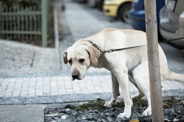 La importancia de recoger las heces de los perros en la calle