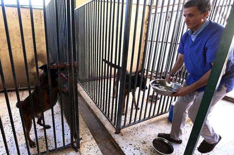 Jalal, un veterinario libio arriesgó la vida para cuidar a decenas de animales domésticos y llevarlos a Túnez.(Foto Prensa Libre: AFP).