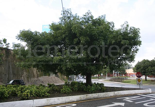 Ceiba que se encuentra a un costado del Estadio Nacional Mateo Flores. (Foto: Hemeroteca PL)