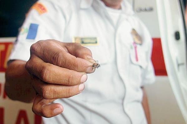 Un socorrista  muestra una avispa atrapada durante un ataque a pobladores de Escuintla. (Foto Prensa Libre: HemerotecaPL: Melvin Sandoval)