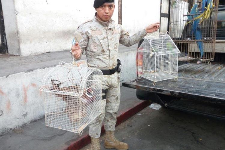 Las siete aves en peligro de extinción son trasladadas por elementos de Diprona a la sede de Conap. (Foto Prensa Libre: Cortesía)
