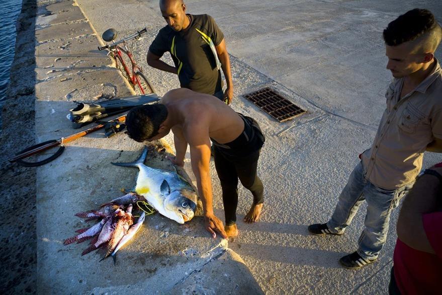 El fruto del esfuerzo son los peces atrapados a lo largo del malecón en La Habana, Cuba. (Foto Prensa Libre: AP).