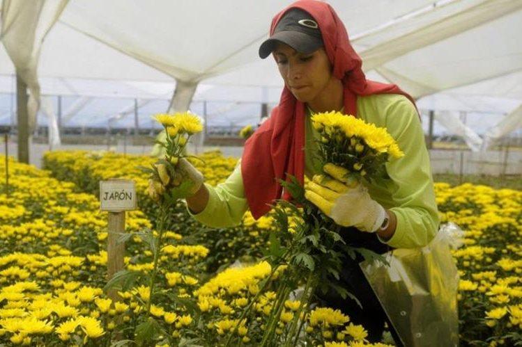 Diversidad de flores serán comercializadas por esa celebración especial. (Foto Prensa Libre: elespectador.com)