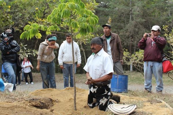 """<p>El vecino Santiago Pamal planta la ceiba en el cerro La Cruz. (Foto Prensa Libre: Miguel López)<br _mce_bogus=""""1""""></p>"""