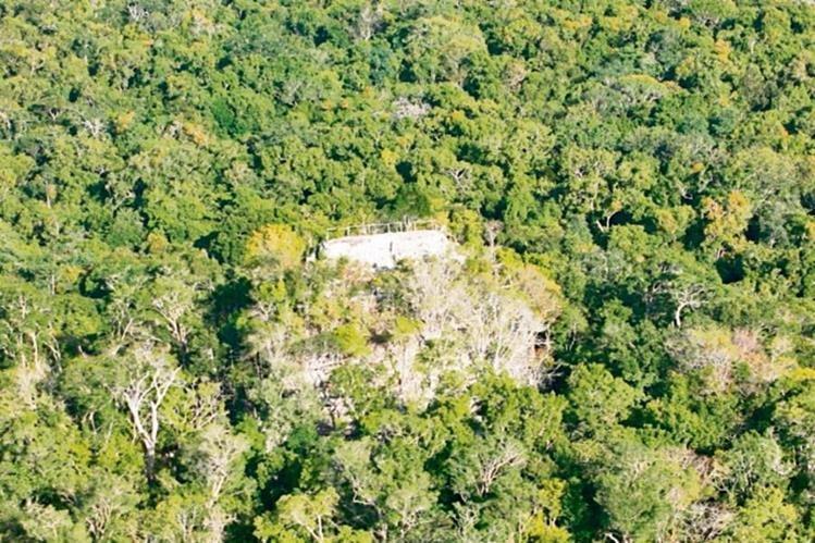 En la selva que rodea al sitio El Mirador existen seis tipos de bosque tropical.(Foto Prensa Libre: Hemeroteca PL)