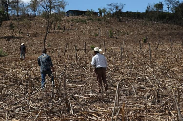 Cantón Valencia en Jutiapa, otra de las áreas afectadas por la sequía. (Foto Prensa Libre: Hemeroteca PL)