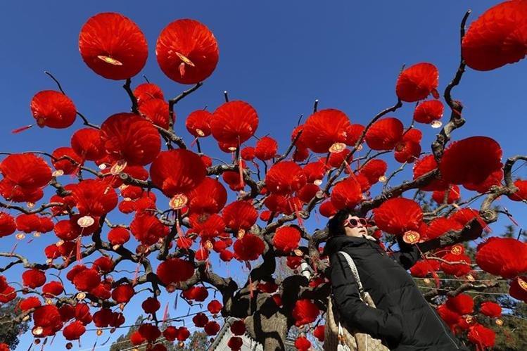 Una mujer pasea bajo un árbol decorado para celebrar el Año Nuevo Lunar en el parque Ditan de Pekín, China. (Foto Prensa Libre: EFE).