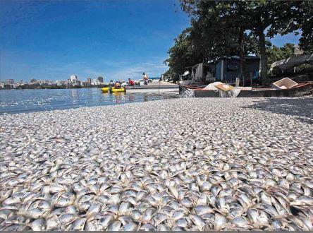 Una enorme cantidad de peces muertos se observa en la laguna Mesá, Retalhuleu, Guatemala. Diferentes industrias suelen vaciar sus desperdicios en los lagos y ríos con lo cual ocasional la muerte de la vida marítima. (Foto Prensa Libre. Hemeroteca PL).