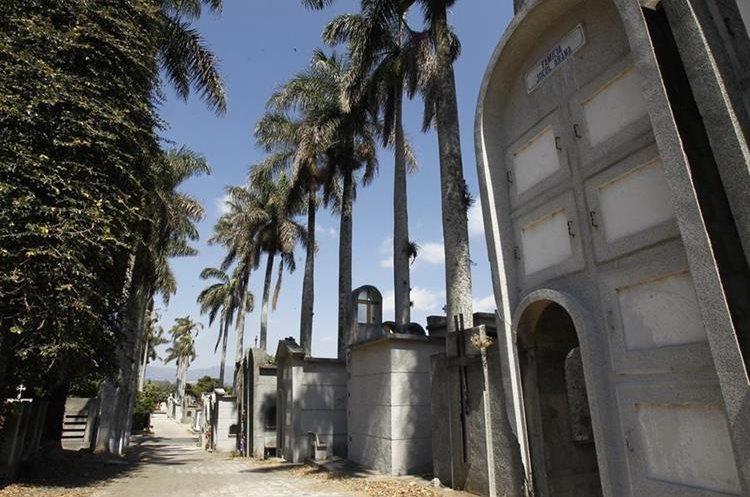 En el Cementerio General se pueden observar araucarias y palmeras de 1895. (Foto Prensa Libre: Paulo Raquec)