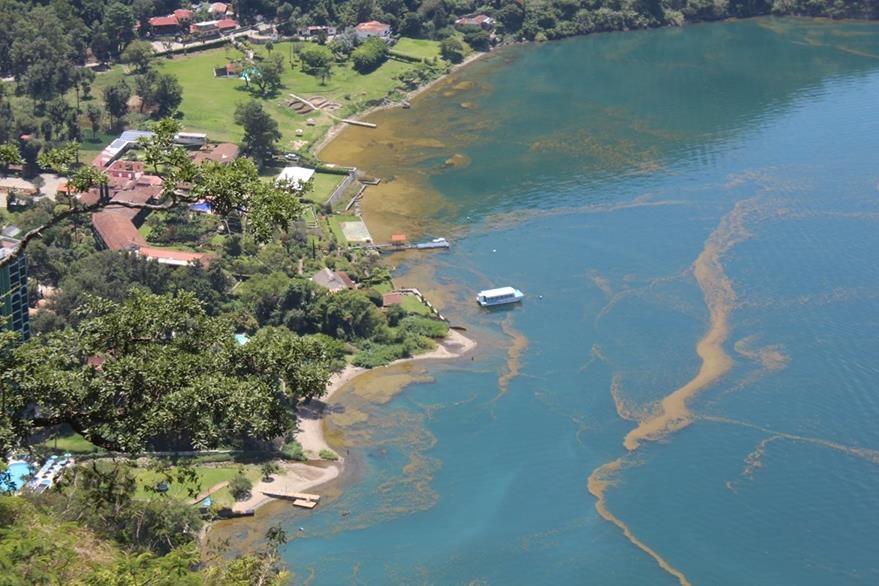 La cantidad de algas producidas por las cianobacterias se ha reproducido de forma alarmante en el Lago de Atitlán. (Foto Prensa Libre: Ángel Julajuj)