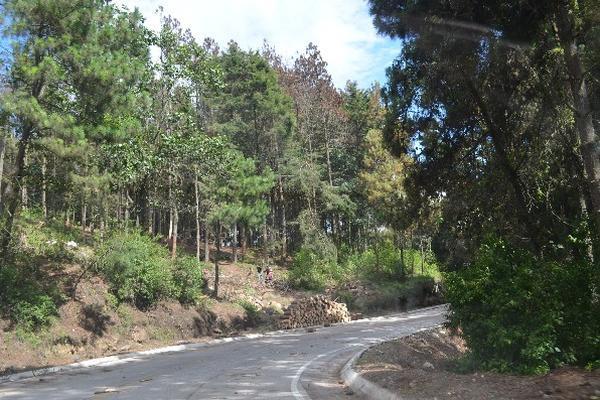 Una de las áreas en  donde se combate plaga de gorgojo, en La Cumbre, San Francisco El Alto.