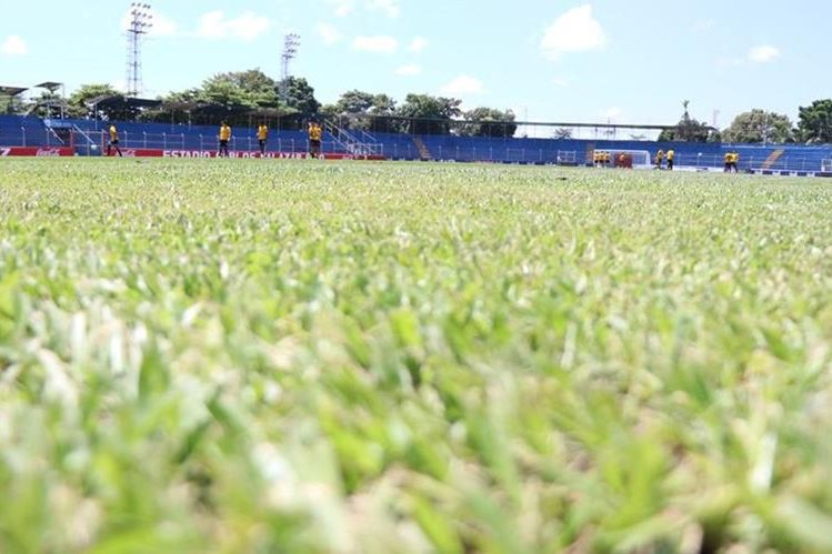 El nuevo cesped del estadio Carlos Salazar hijo está listo para el duelo que sostengan los Venados frente a Antigua GFC. (Foto Prensa Libre: Cristian Soto)