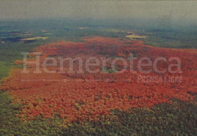 La mancha roja indica que el árbol ya está muerto, puede verse la magnitud del daño causado por el gorgojo en Totonicapán en 2004. (Foto: Hemeroteca PL)