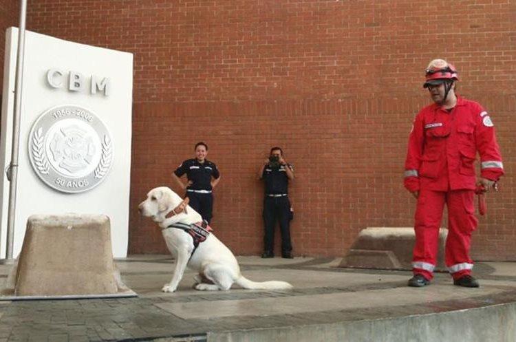 El perro Drago fue adoptado y entrenado para la búsqueda y rescate de personas en situaciones de emergencia. (Foto Prensa Libre: Facebook Donald Piedrasanta)