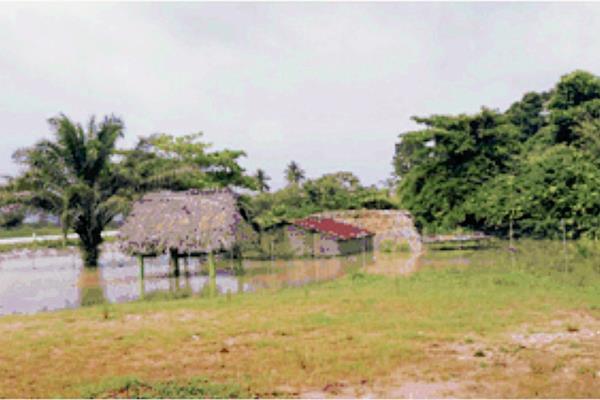 Varias Viviendas fueron inundadas por el desborde del río Chahal, en Livingston, Izabal. (Foto Prensa Libre: Conred)