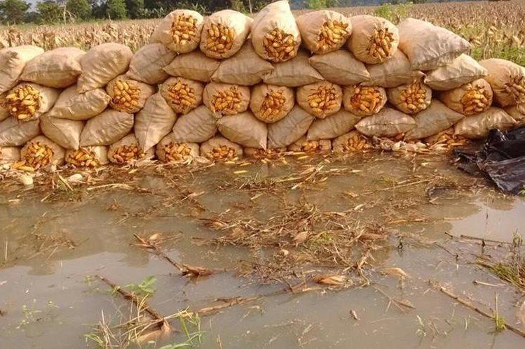 Cultivos de maíz inundados en Ixcán, Alta Verapaz, a causa de las pasadas lluvias. (Foto Prensa Libre: Cortesía Anagrab)