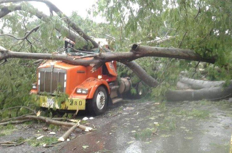 Un árbol cayó sobre un tráiler en la carretera de Retalhuleu a Champerico. (Foto Prensa Libre: Rolando Miranda)