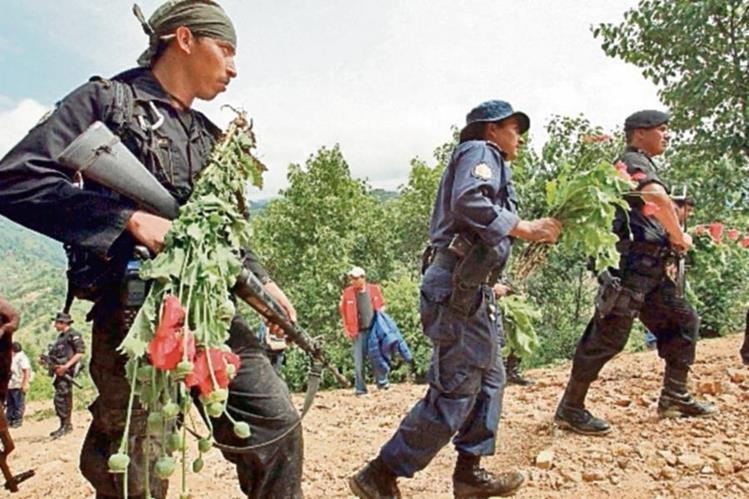 Agentes de  la SGAIA efectúan operativos en San Marcos para erradicar plantaciones de amapola. (Foto Prensa Libre: Hemeroteca PL)