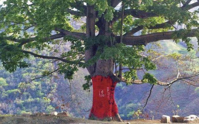Entre las denuncias en redes sociales destaca una Ceiba y su corteza pintada de rojo. (Foto Prensa Libre: Facebook)