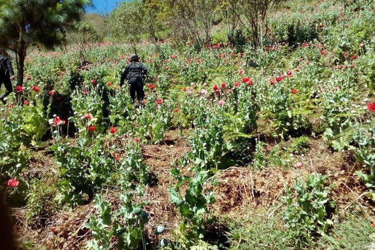 Imégenes del operativo efectuado por la Policía en una aldea de Tactic. (Foto Prensa Libre: Eduardo Sam)