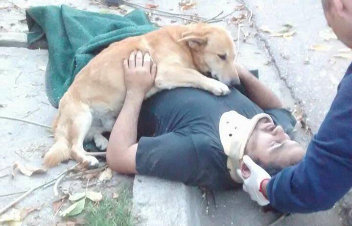 El perro Tony permanece junto a su amo luego de haber sufrido un accidente, en Argentina. (Foto Prensa Libre: Facebook Defensa Civil Bahía Blanca)