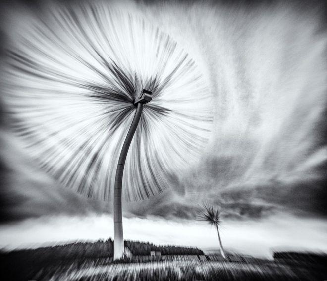 """Derek Snee presenta su fotografía con estas palabras: """"Imaginen que podemos usar vida vegetal para generar energía eólica. Bien, ahora podemos. Señoras y señores… les presento el parque eólico Diente de León Turbo"""", de Northumberland, Reino Unido. DEREK SNEE"""