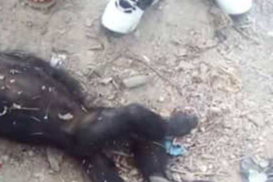Cadáver de uno de los monos que murió baleado. (Foto Prensa Libre: Rigoberto Escobar).
