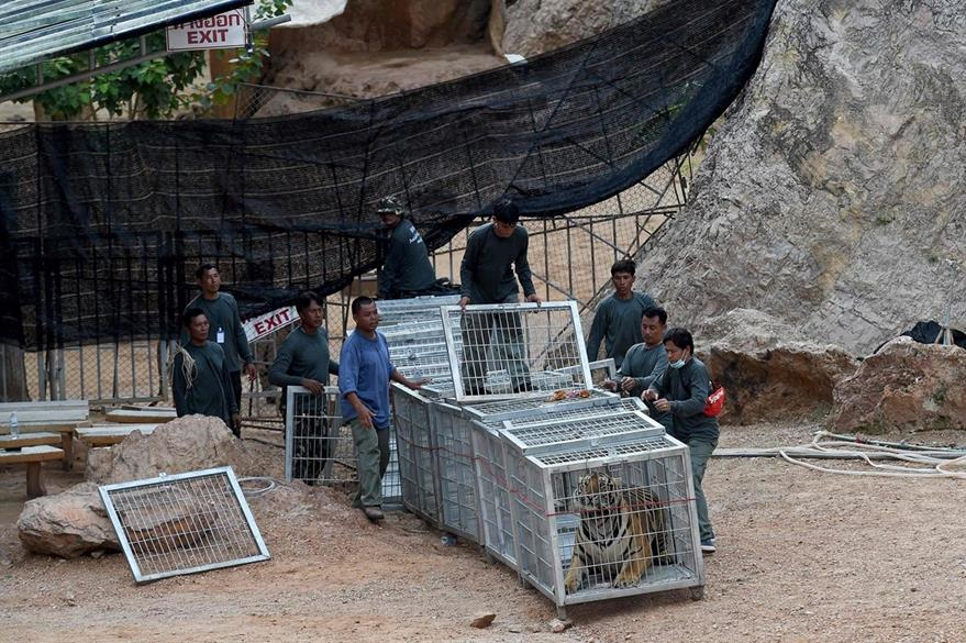 Vista general del Templo del Tigre en Tailandia donde fueron hallados 40 tigrillo muertos. (Foto Prensa Libre: AFP).