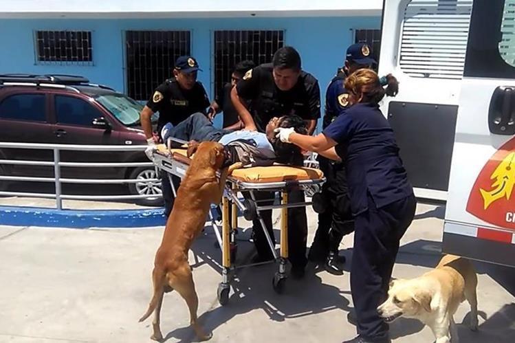 Las mascotas no se separaron de su dueño mientras era atendido por paramédicos. (Foto: Internet)