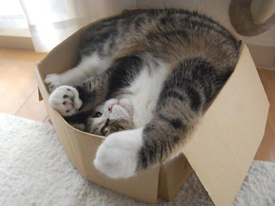La gatita se podrá recuperar. (Foto referencial del sitio catboxkingdom.com)