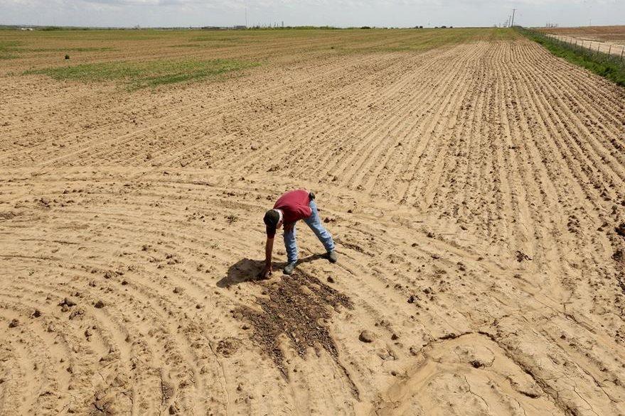Cada año se registra una pérdida neta una pérdida neta de 10 mil millones de árboles cada año. (Foto Prensa Libre: AP).
