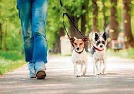 Salir a caminar con la mascota relajará a esta y a su amo. Esta práctica debe hacerse a diario.