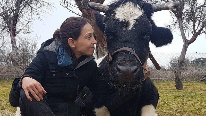 """Una defensora de los animales posa junto a la vaca """"Carmen"""" que fue salvada gracias a miles de firmas. (Foto tomada del sitio: www.change.org)."""