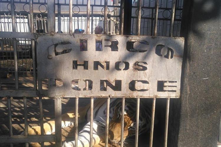 En el terreno se localizaron 13 tigres de bengala y dos camellos. (Foto Prensa Libre: Cortesía Conap)