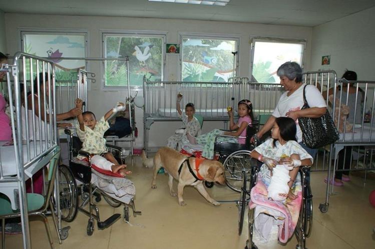 Voluntarios acuden con sus perros a los centros de salud para llevar energía positiva. Foto Prensa Libre: Cortesía Dog Therapy AAA.