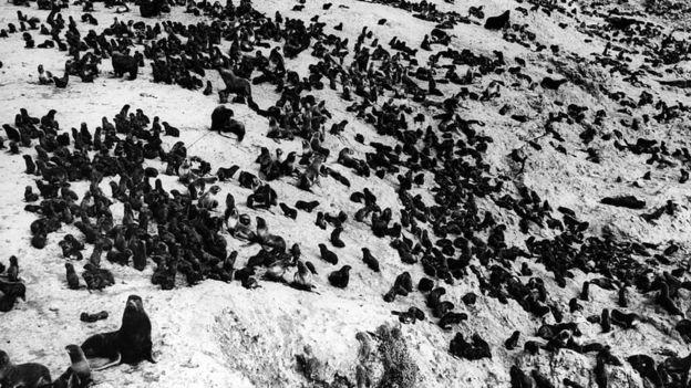 El mar de Bering es hoy en día territorio de mamíferos marinos. GETTY IMAGES