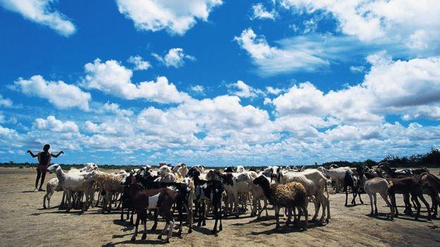 El retiro de la vegetación para acomodar el pastoreo afectó la ecología y redujo al frecuencia de lluvias en la región.  (Foto Prensa Libre: Getty Images)
