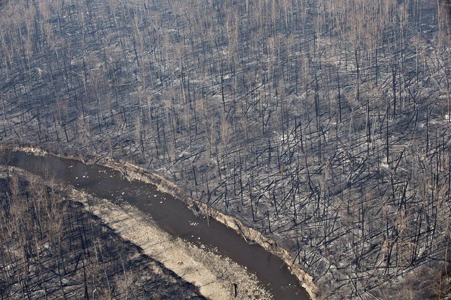 Parte de los dos mil 900 kilómetros cuadrados de bosque que han sido consumidos por las llamas. (Foto Prensa Libre: AP).