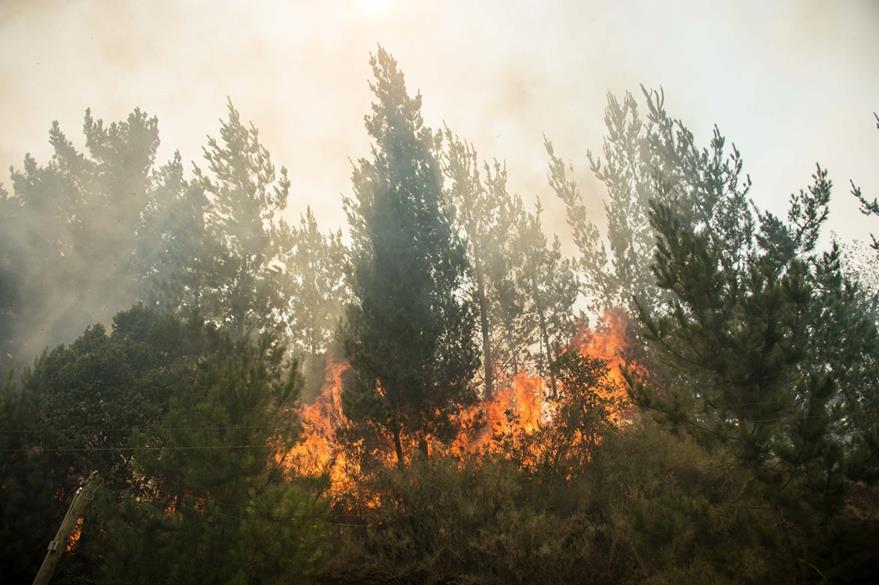 Chile está en emergencia por la racha de incendios forestales. (Foto Prensa Libre: AFP).