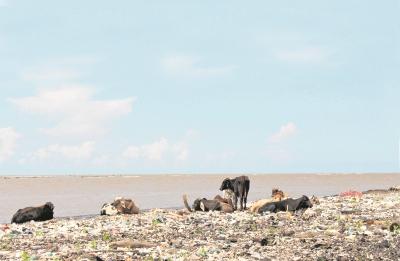 En la desembocadura del río Motagua, en Punta de Manabique, Izabal, se acumulan toneladas de basura. (Foto Prensa Libre: Dony Stewart)