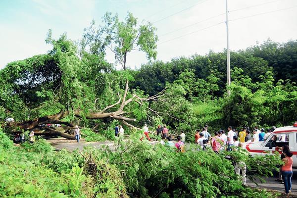 Vecinos de Coatepeque no pudieron transitar en el km 226 de la ruta al suroccidente, debido a que un árbol de grandes proporciones cayó en la carretera. (Foto Prensa Libre: Alexánder Coyoy)