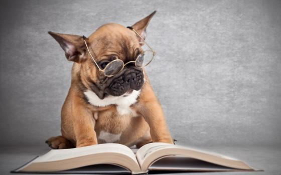 Los investigadores llegaron a la conclusión de que los perros desarrollan demencia senil de un modo parecido a los hombres.