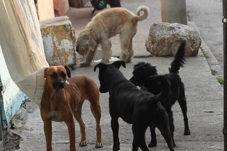 Dudan de las capacidades para aplicar la Ley de Protección Animal. (Foto Prensa Libre: Hemeroteca PL)