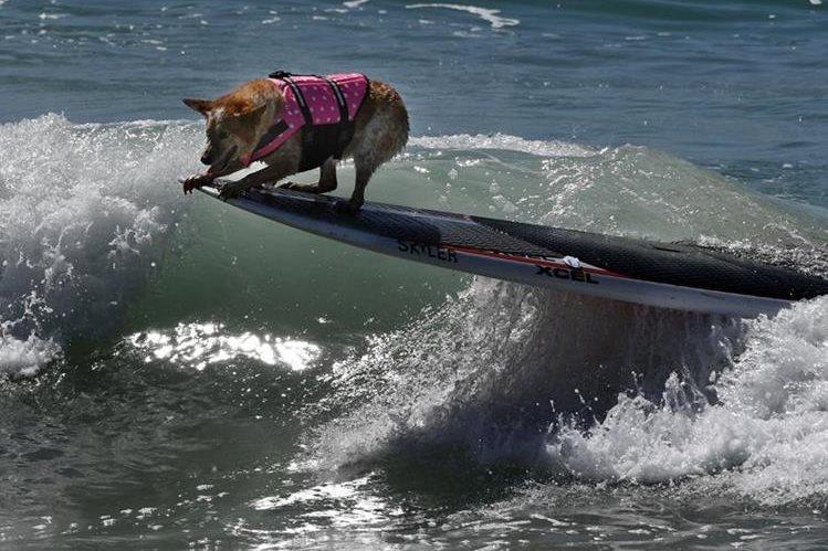 Los perritos mostraron su equilibrio al sortear con las olas. (Foto Prensa Libre: AFP)